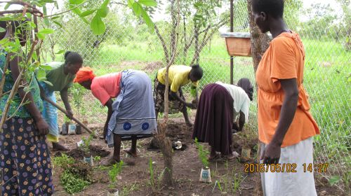 We planted some tree seedlings and some flowering plants.